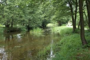 """Rzeka """"Wierna"""" w Bocheńcu"""